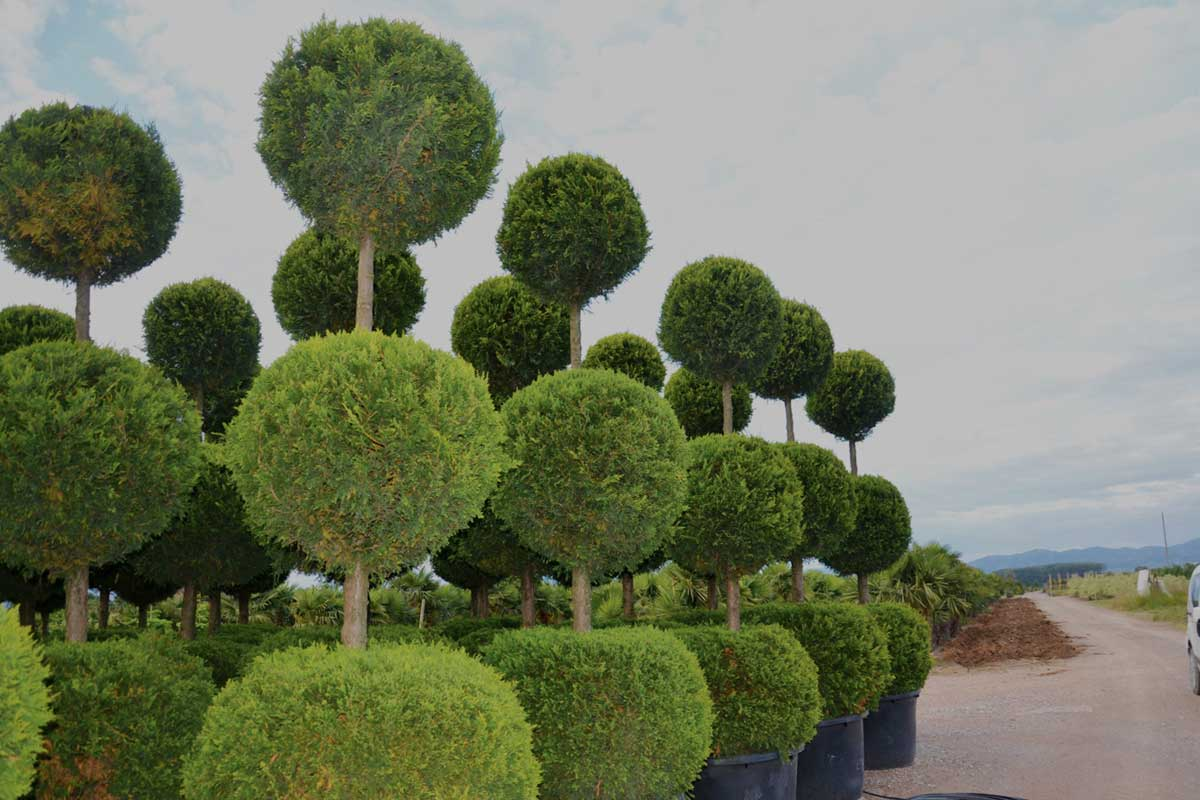 UNIQUE TREES - Outdoor Luxury