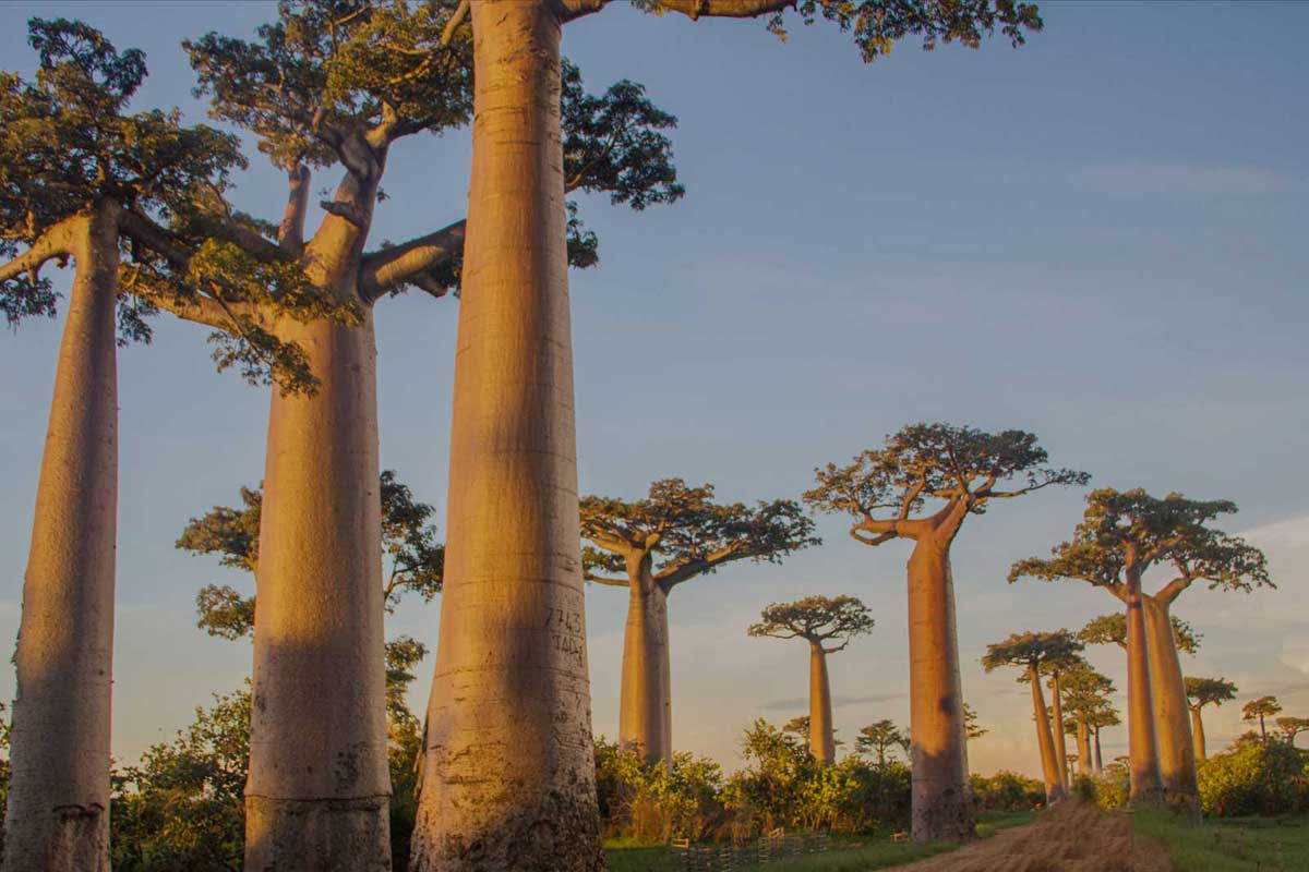 Contact US >> UNIQUE TREES - Outdoor Luxury